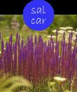 salcar12m