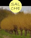 salche12m