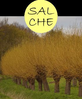 salche12p