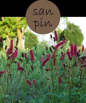 sanpin2p