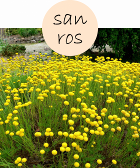 sanros42p