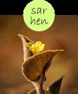 sarhen12m