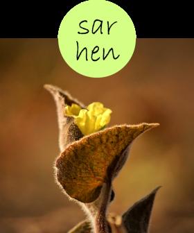 sarhen12p