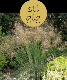 stigig52p