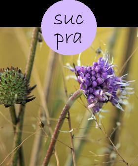 sucpra12p
