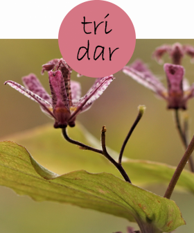 tridar62p