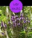 vermac82m