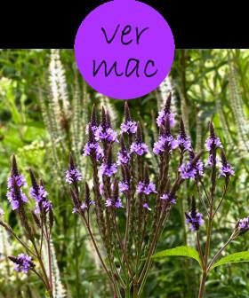 vermac82p