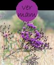 vermam22m