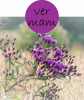 vermam22p