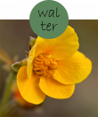 walter22m