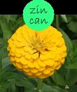 zincan102m