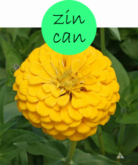 zincan102p