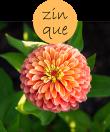 zinque102m